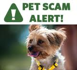 Beware of Online Pet Scams